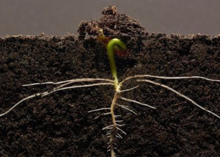 Stay Planted, Spring IsComing.